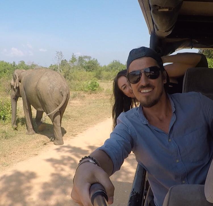 sri lankan safair wild elephant