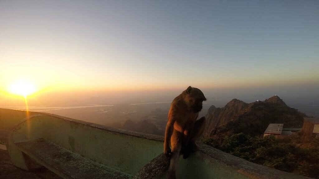 zwegabin sunset monkey