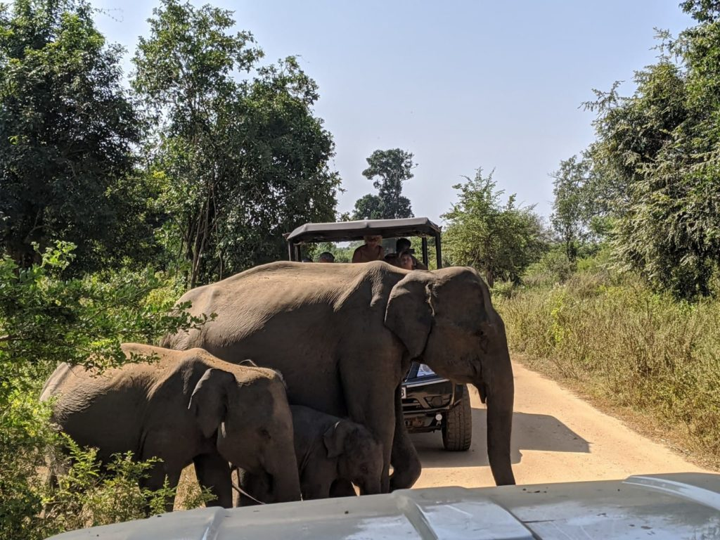 ethical safari in sri lanka