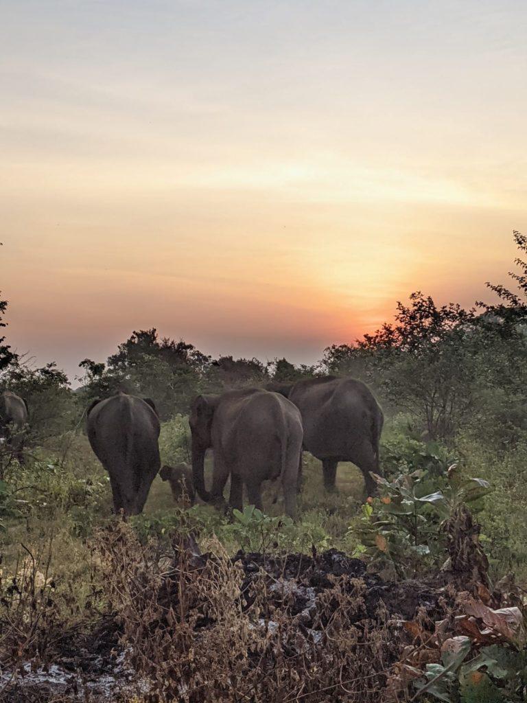 magical sunrise at Udawalawe national park