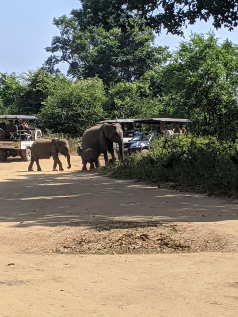ethical safaris in sri lanka