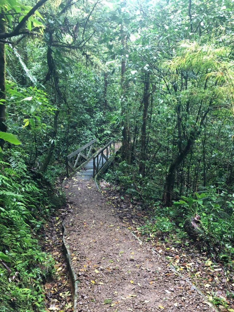 monteverde cloud forest hikes