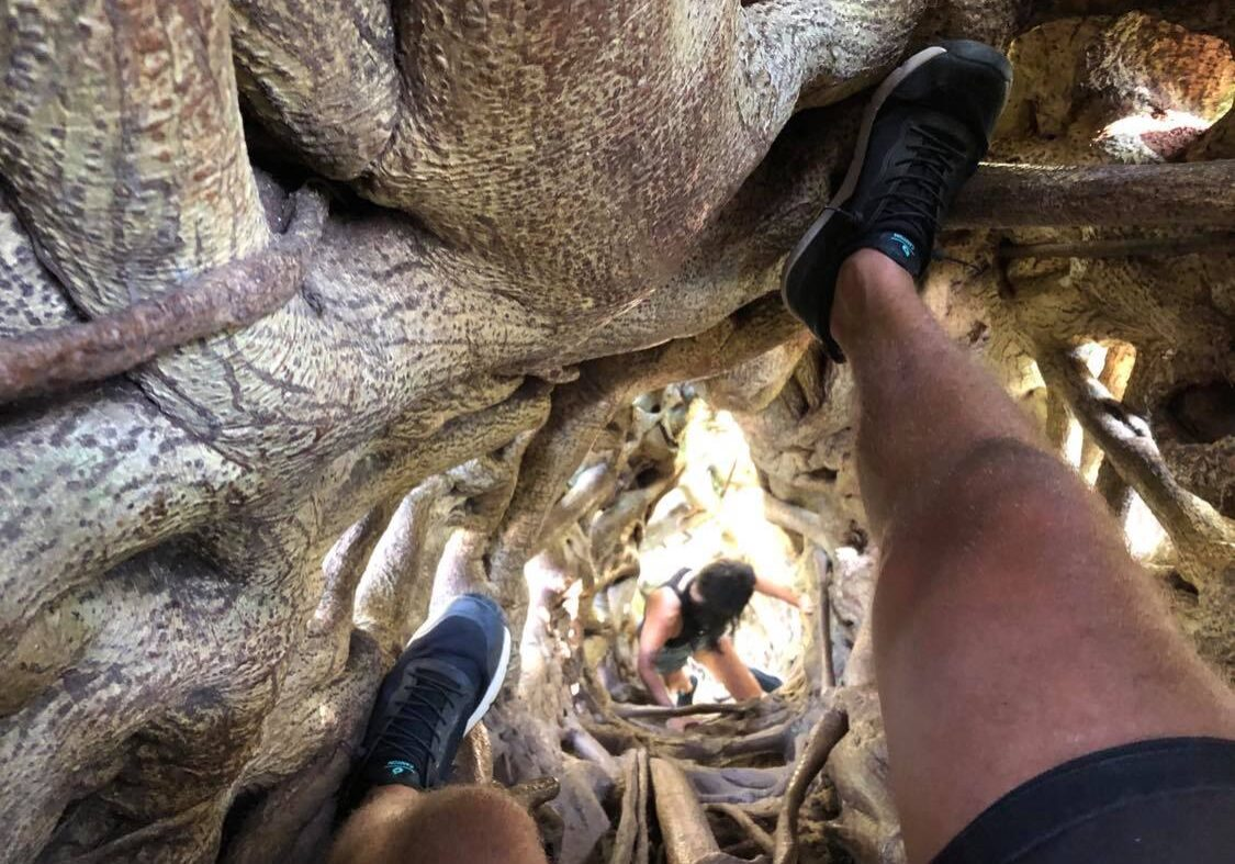 ficus tree climbing monteverde