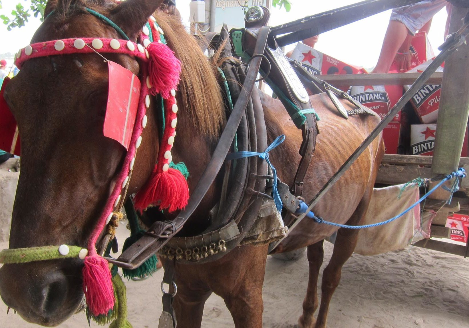 horse treatment on gili islands