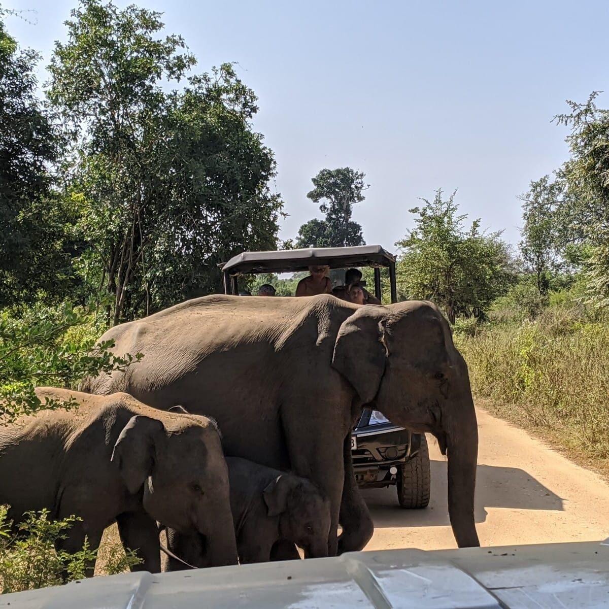 sri -lanka-safaris-ethical
